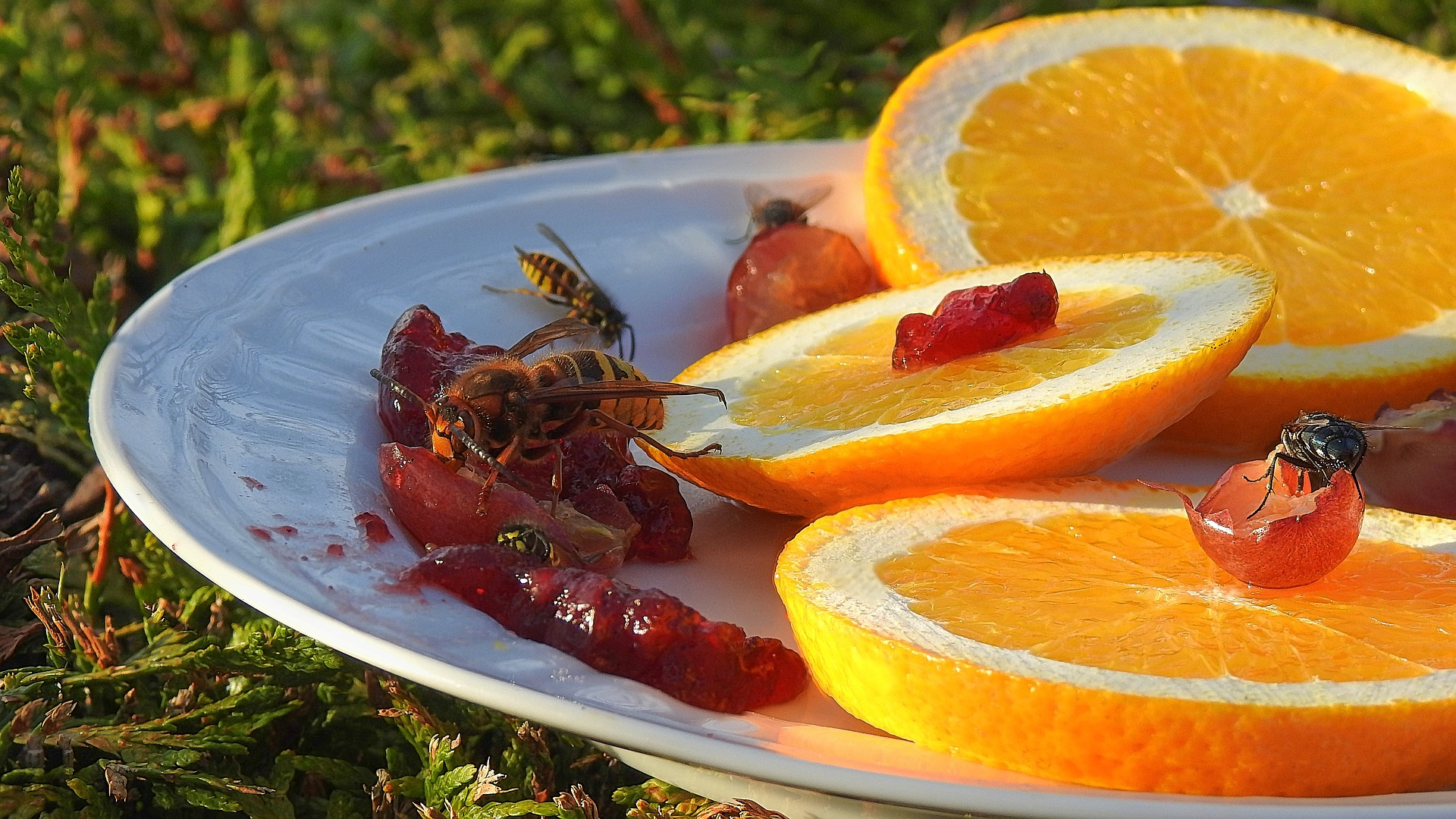 insects-feeding-3736076_1920