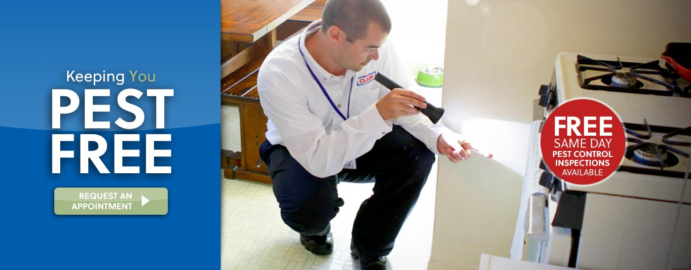 Home and Business Pest Inspection